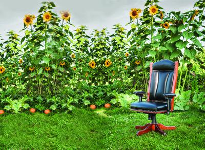 Desk Chair - adjustable arms