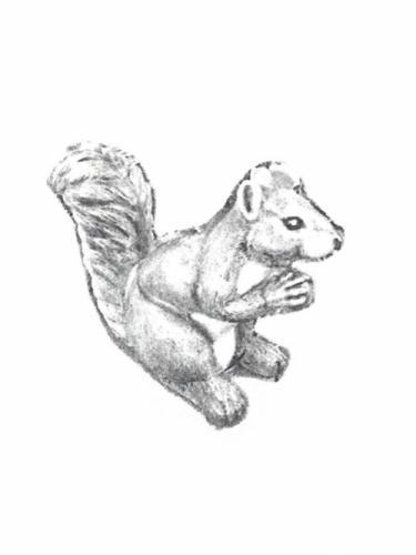 """Medium Squirrel - 8"""""""