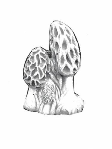 """Morel Mushroom - 12"""" high"""