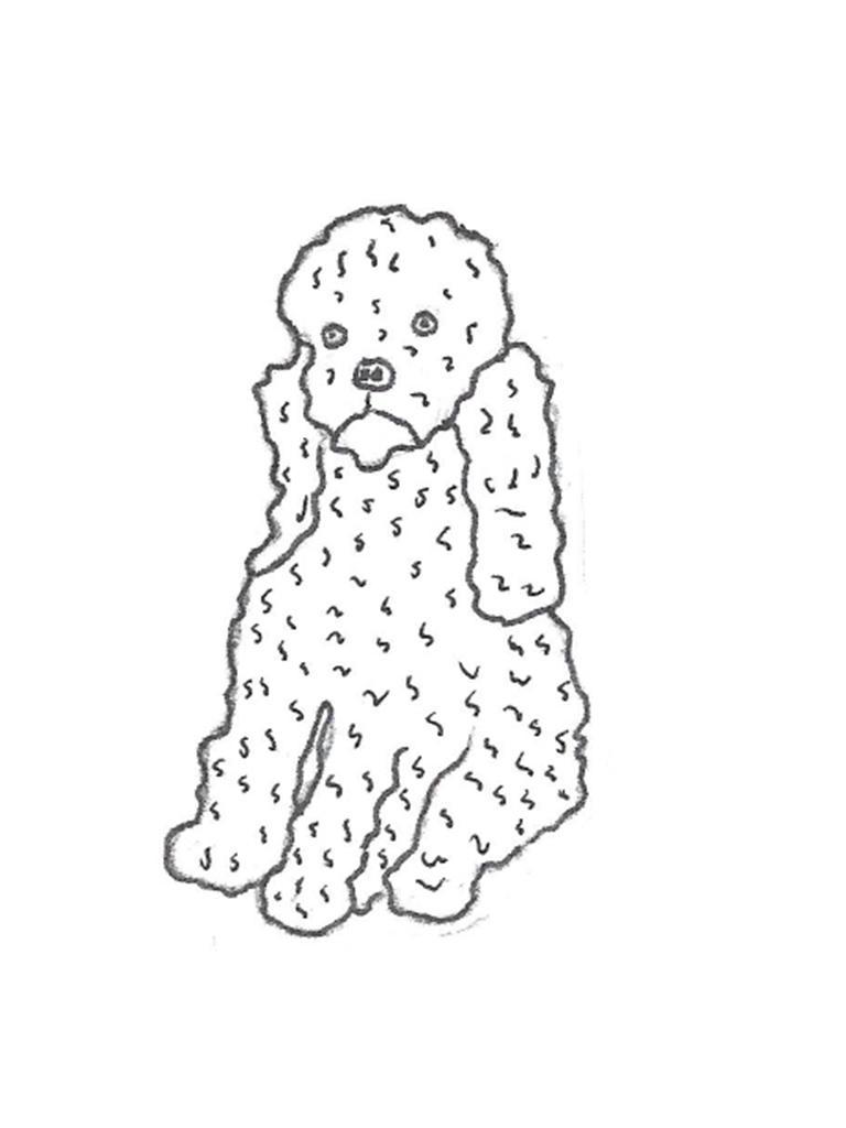 """Poodle - 8"""""""