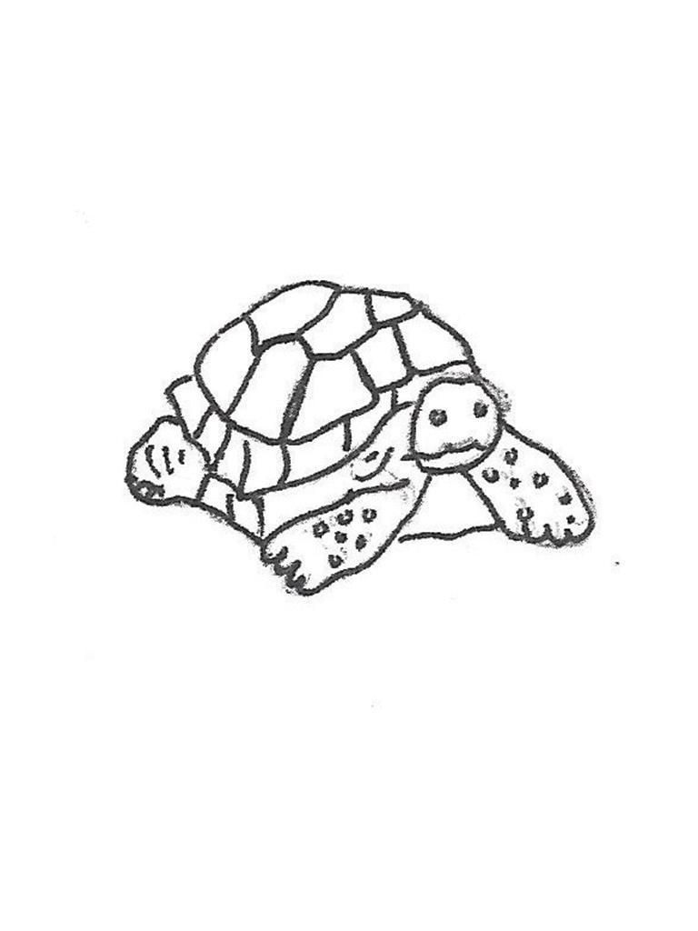"Snapper Turtle - 12"""
